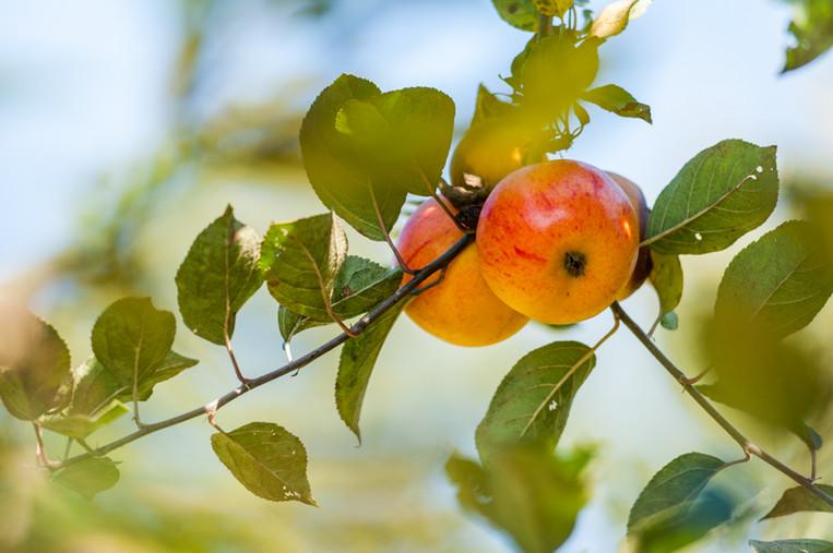 Unterholz Apfellikör aus dem Odenwald