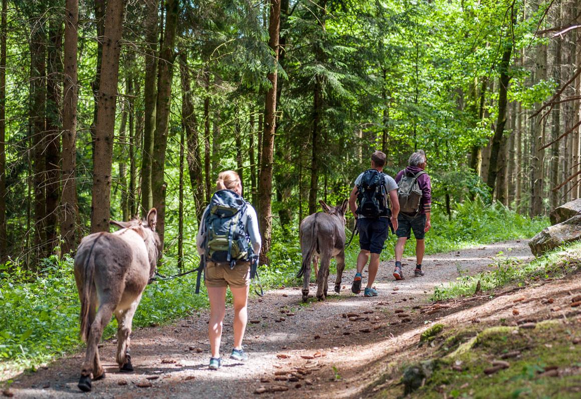 Eselhof Binzig – Eselwandern Odenwald