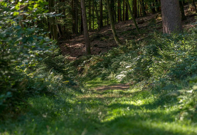 Ein schöner Wanderweg im Odenwald