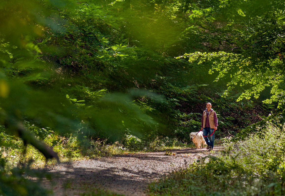 Im Buchklinger Wald