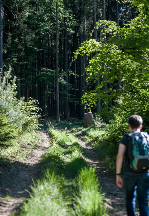 myodenwald-Odenwald-Niebelungensteig-Rotes-Wasser-Olfen-66.jpg