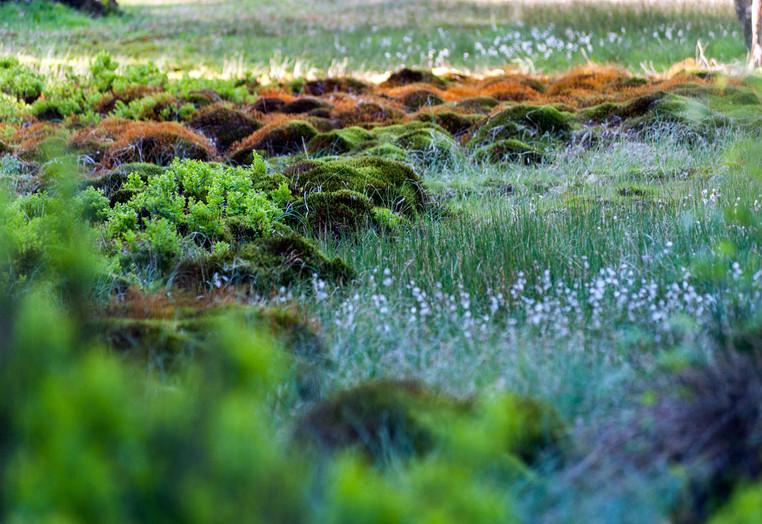 Rotes Wasser / Olfener Moor