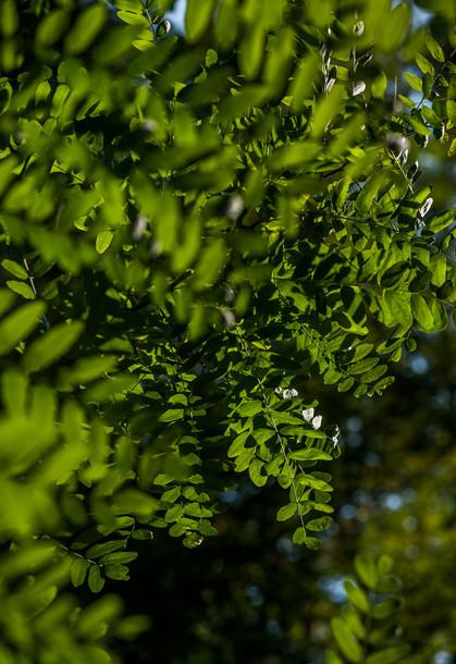 Saftiges Grün im Buchklinger Wald