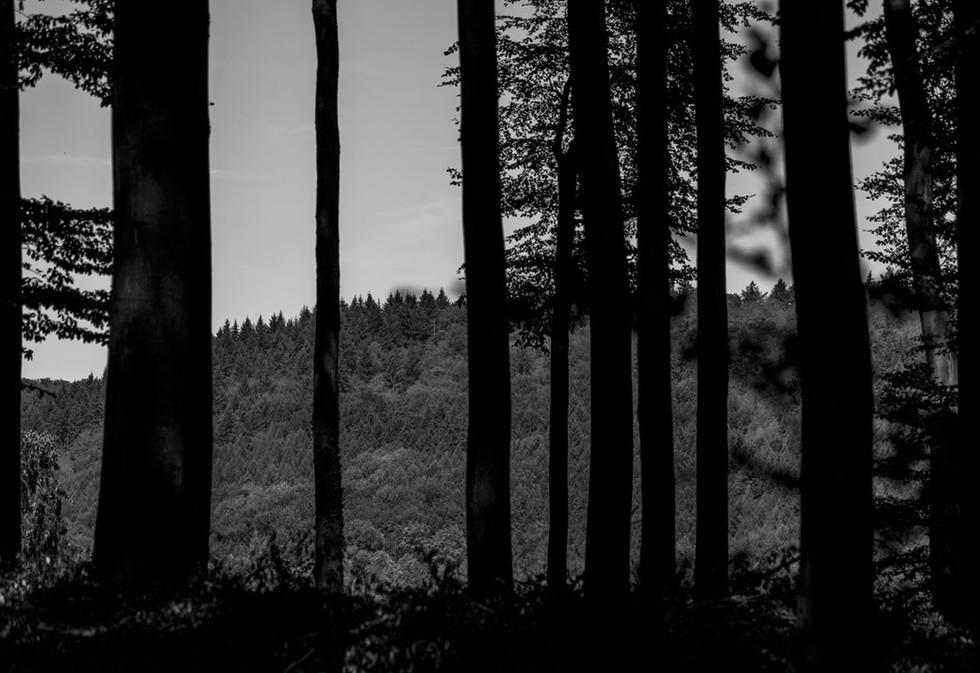Odenwald, Baumlandschaft
