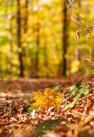 Bunter Herbstwald – Schöner Wanderweg