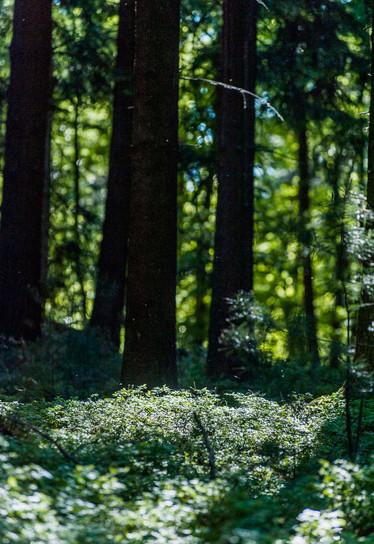 myodenwald-Odenwald-Niebelungensteig-Rotes-Wasser-Olfen-73.jpg