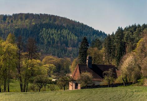 Osterglockenfahrt Odenwald.
