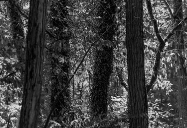 Odenwald, Bäume
