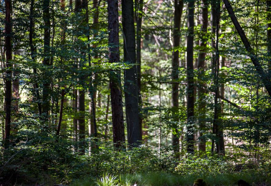 Schöne Wälder im Odenwald.
