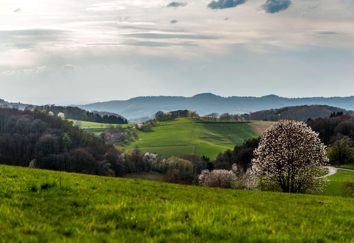 Frühlung im Odenwald