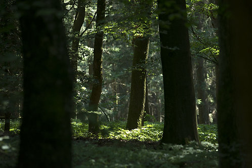 Wald | Götzenstein