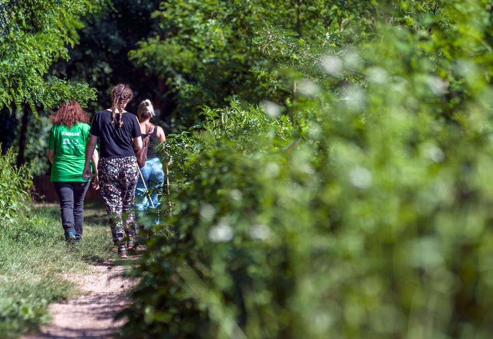 Margarethenschlucht im Odenwald