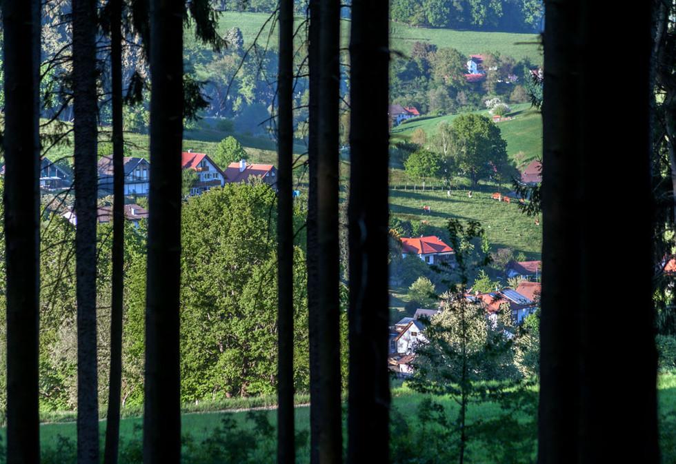 myodenwald-Odenwald-Niebelungensteig-Rotes-Wasser-Olfen-232.jpg