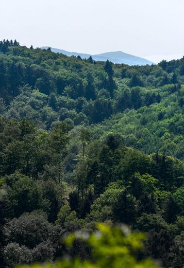 Blick auf den Odenwald