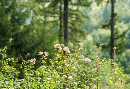 Natur Pur im Odenwald