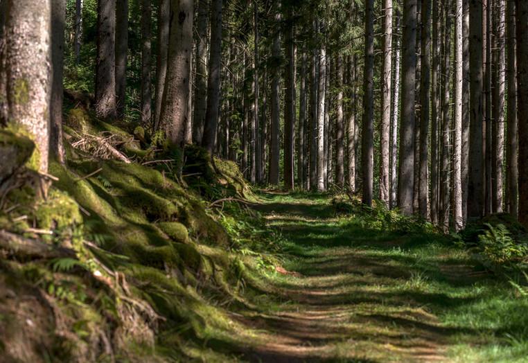 Wunderschöne Faura und Flora in dem Tal und Naturschutzgebiet.