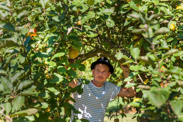 Max Krings bei der Apfelauslese