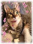 Cute cat pic from Dean.jpeg