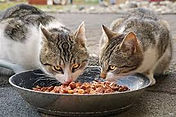 Outside cats eating.jfif