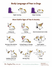 Identifying Fear & Anxiety Signals in Dogs