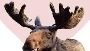 Moose Tracks - February 2020