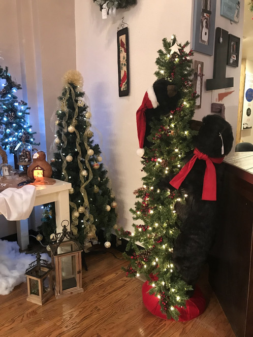 Black Bear Peek-a-Boo Tree (6 ft)