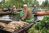 TOi Kashmir 5N