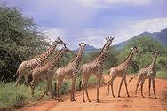 TOi Kenya