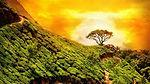 TOi South India 5N