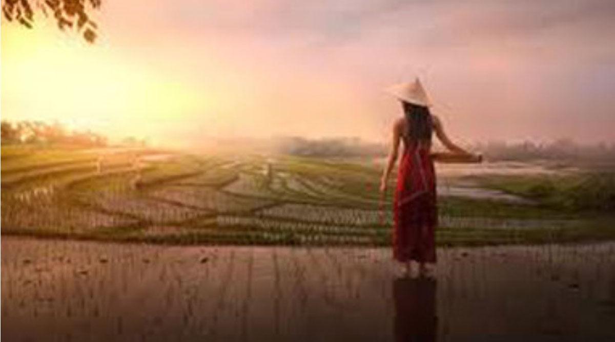 Femme devant une rizière