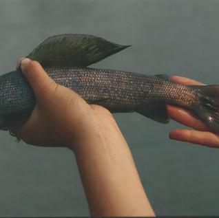 fish0012.jpg