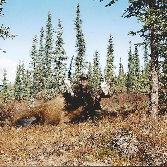 moose0002.jpg