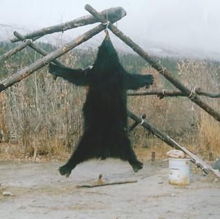 blackbear0004.jpg
