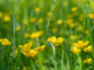 meadow-2393669_1280_modifié.jpg