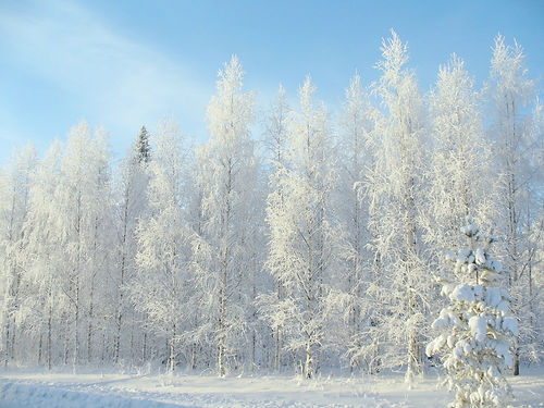 winter-2683845_1280_modifié.jpg