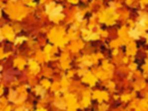 autumn-83761_1280_modifié.jpg