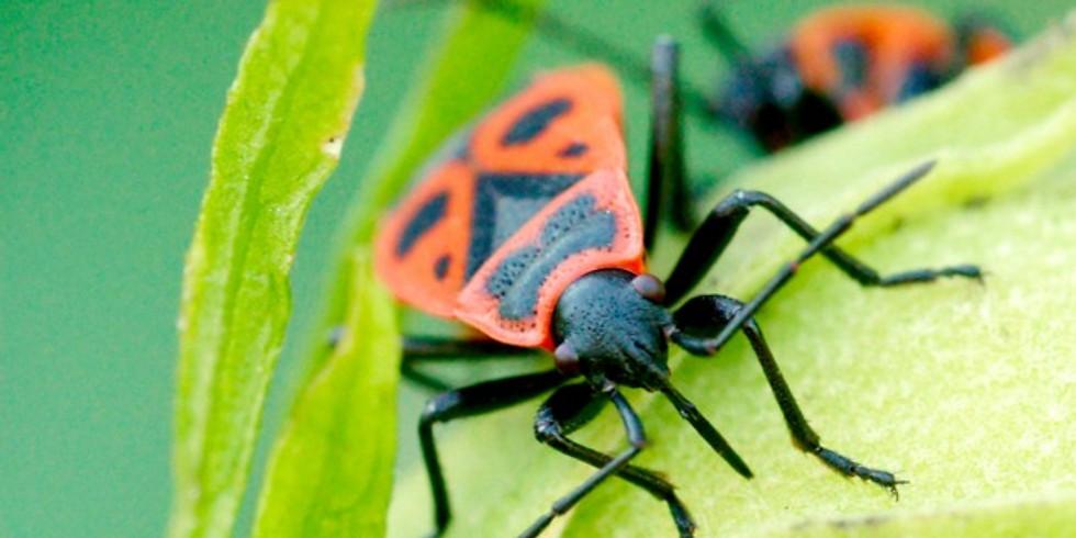 Journée gendarmes et hôtel à insecte