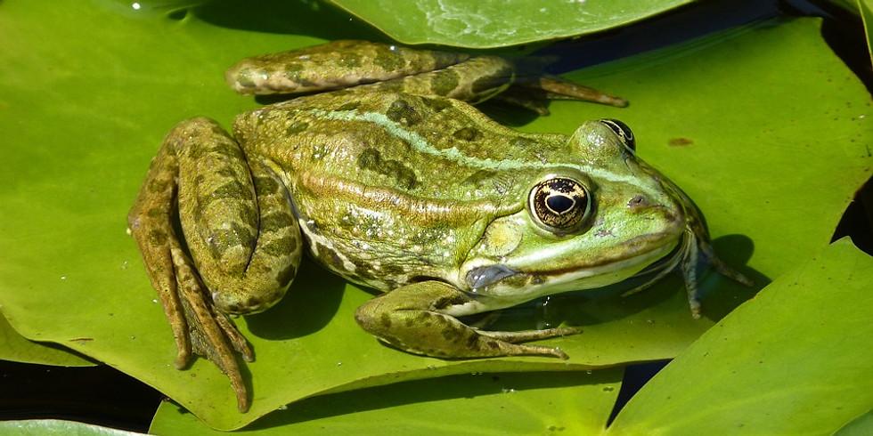 Semaine de la grenouille