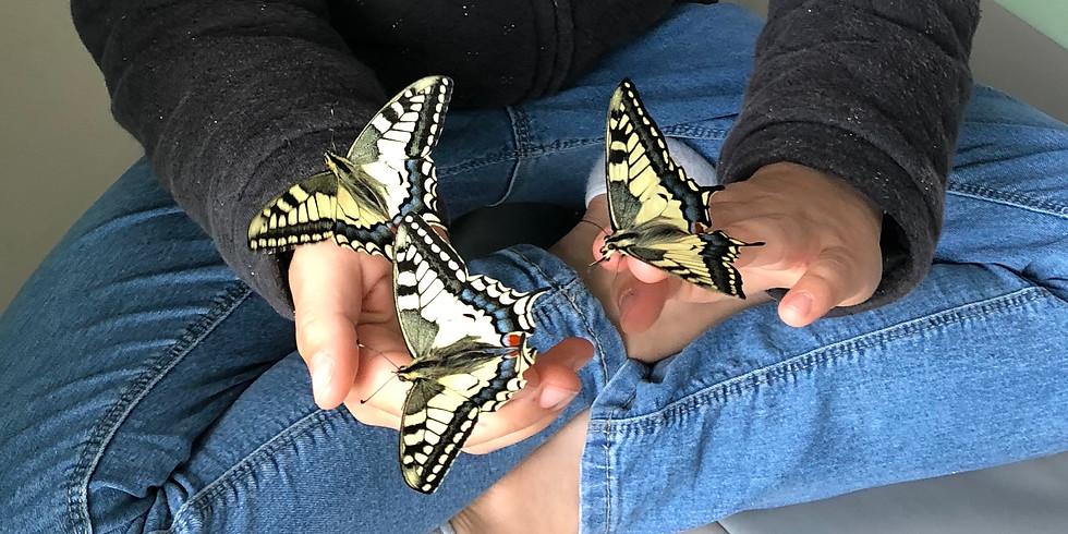 Les papillons Machaons
