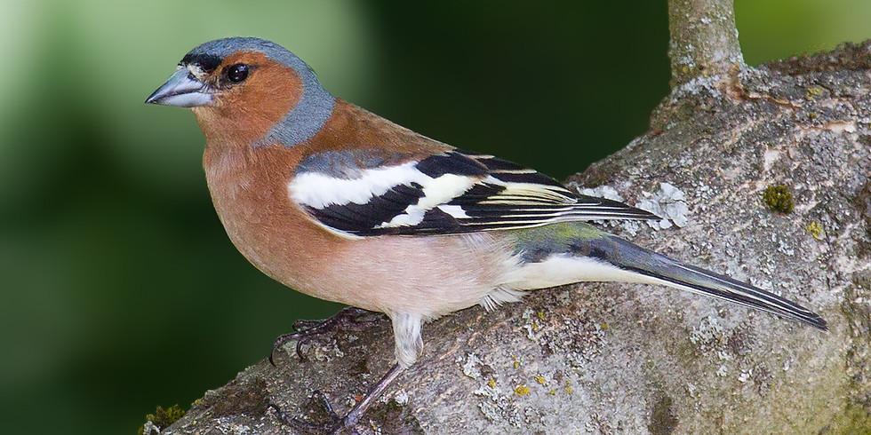 Atelier parent-enfant : Les oiseaux et le ténébrion