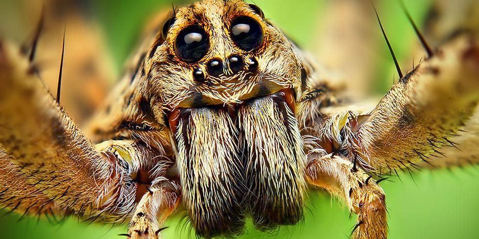Les araignées d'Halloween...