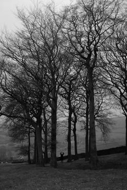 Twenty Trees
