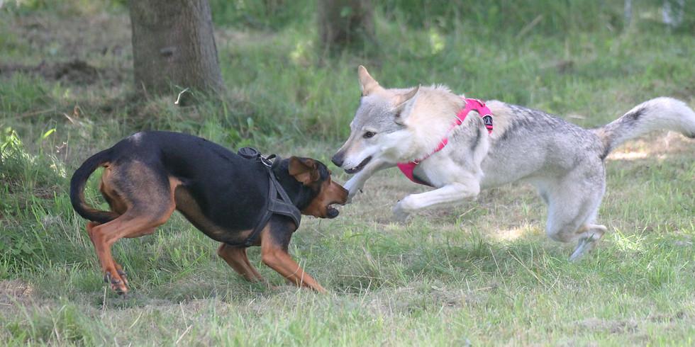 Tagesseminar: Hunde-Kommunikation - eine Reise in eine Welt ohne Worte
