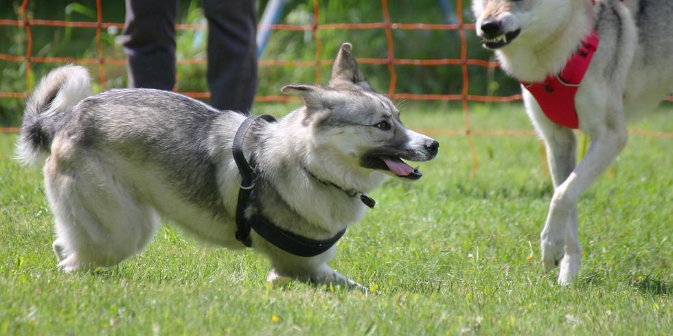 Seminar- und  Workshop-Wochenende: Welche Rolle spielt mein Hund?