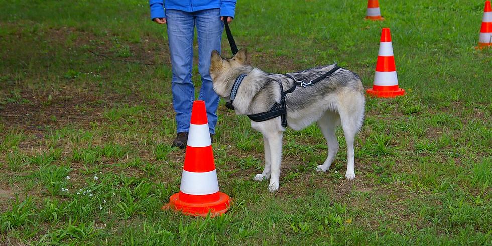 Workshop-Wochenende: Ich führe meinen Hund.