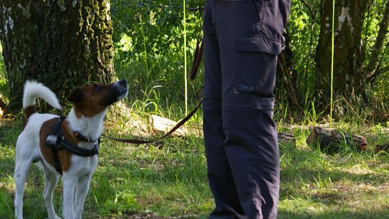 Tages-Workshop 2021:  Ich führe meinen Hund - Praxis-Seminar für ein souveränes Miteinander
