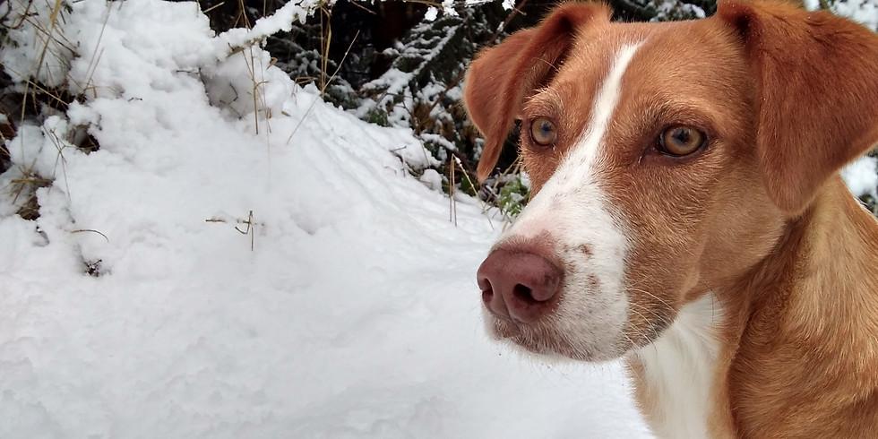 Winter-Spaziergang am 1. Februar 2020 - Schmöckwitz