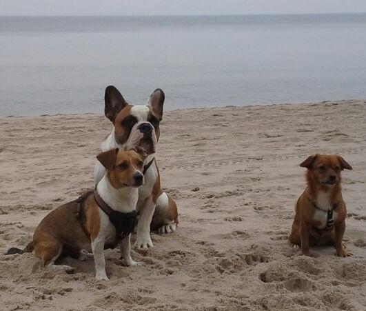 Tobi, Pit und Pia