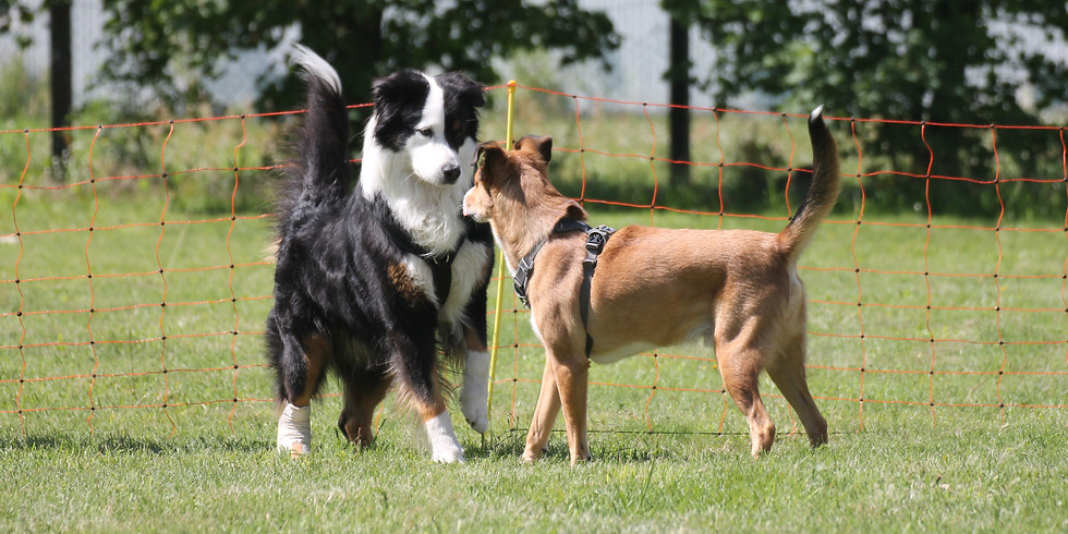 Vortrag: Die 4-B's der Hunde-Kommunikation