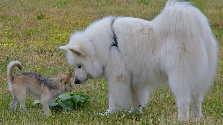 Tages-Seminar 2021:  Mein Hund in  Aktion - beobachten, erleben und verstehen